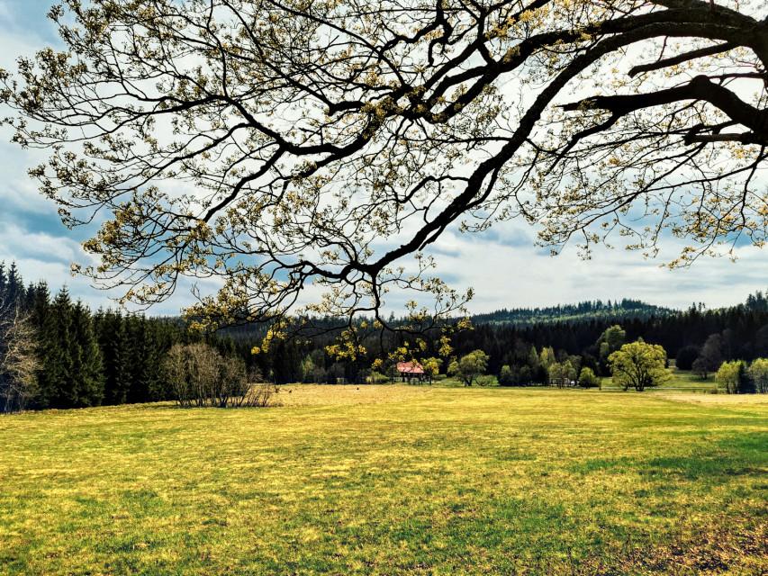 #freetoedit #nature #tree #grass #grassland #myphoto #holliday #vacation #beautifulday #beautifulnature #sunnyday