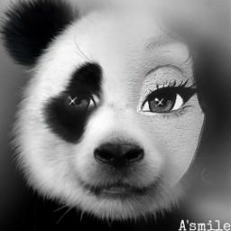 freetoedit @asweetsmile1 face panda blend blendedimages animal cute blackandwhite blackandwhitephotography cartoon ecmyanimalalterego myanimalalterego