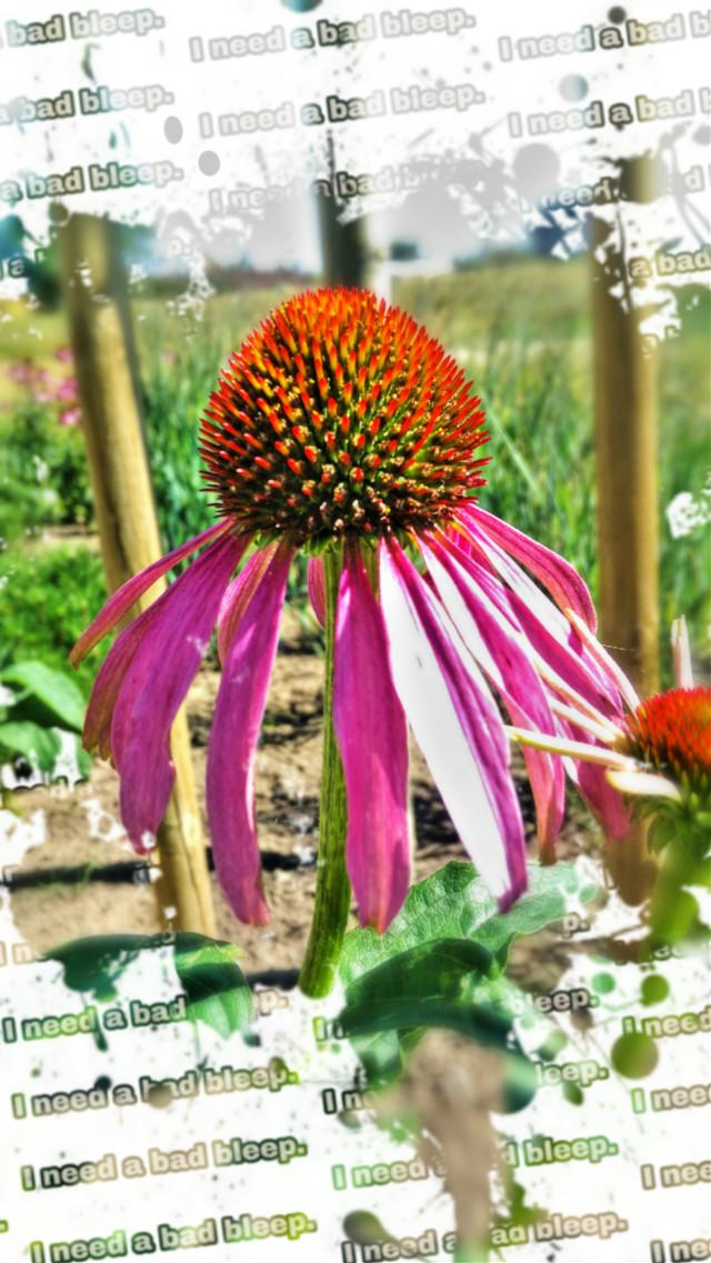 #freetoedit #naturephotography #flowers #artisticeffect #plants ##photography