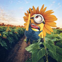 freetoedit editwithpicsart remix mrlb2000 minions amwesome fun summertime lol