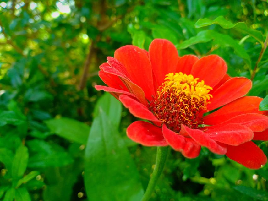 #Qayoumkhan27 #qayoumkhanphotography #quetta #balochistan #pakistan #garden #flowerpot #flowers #flowerstyle #greenerydecor #flowersnearyou #flowerslovers #blossom #floweroftheday #prilaga #flowersofinstagram #insta_pick_blossom #petals @laumarin158 @golfarahani @mahirahkhan #animaleye #fanartofkai #pcbeautifulbirthmarks #tattooday #ircfanartofkai #beautifulbirthmarks #red @wernerrumpeltes @11730513758722377 @love-1960 @gitikatandon @burcukeskin @mariyam_baloch77 @@bhaveshpaliwal777 @@jungko___okie @@johnny2423 @@abinayaheal @@_miss_sushi_ @@amin-16 @@heidimerry @@11662237228179556110 @@sarah77777222 @@rfg99picsart @@elenika797 @@__78674 @@angelamerlo1 @amandanash13 @eviiaprianti1957  @andreea-03@kamranchang22 @montserratjaurez24 @stickergamestrong @iamhemantsharma_ @burr_pi