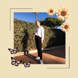 freetoedit picsart replay butterfly frame goldenhour sun flower sunflower smartoutfit dressedup trees palmtrees dayout