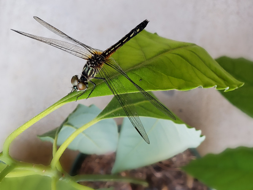 #nature #photography #insect #dragonfly #wings #interesting #freetoedit