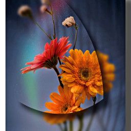 flowers floral flowerart makeawesome shadowmask freetoedit