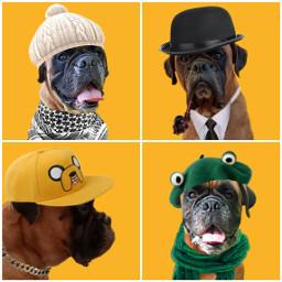 fashion hats roy mydog fashionart