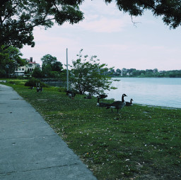 freetoedit coasrline coast waterfront shoreline path walkway neighborhood mansion houses closetonature enclave malba