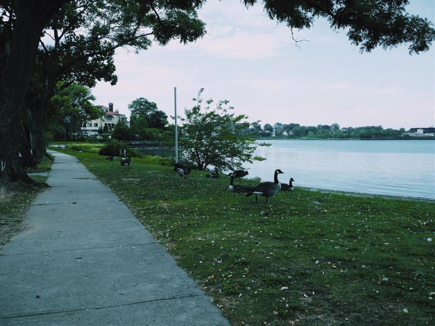 #coasrline#coast#waterfront#shoreline#path#walkway#neighborhood#mansion#houses#closetonature#enclave#Malba