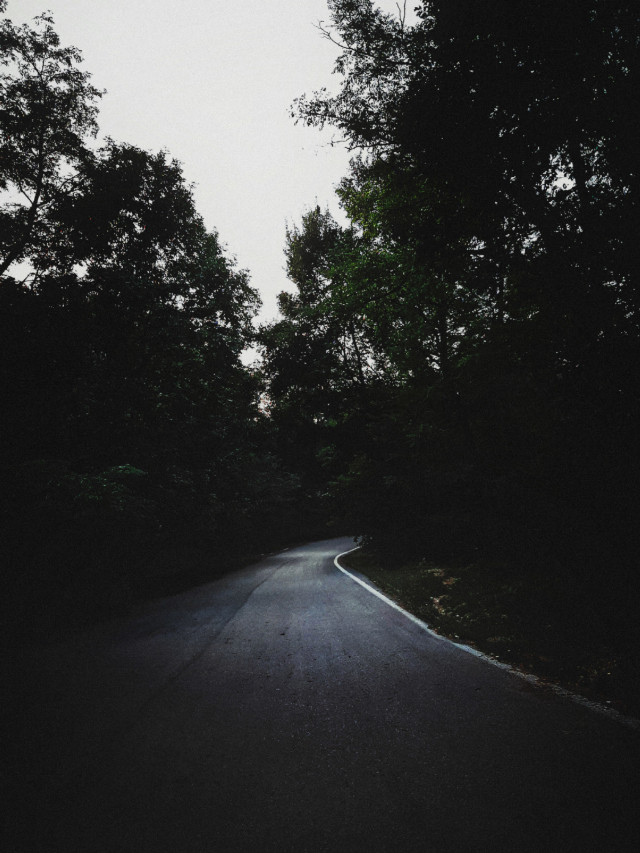 🖤  #myphotography #nature #path #forest #woods #background #trees #dark #moody #freetoedit