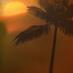 myedit sunset goldenhour shadow brouwn orangecolor