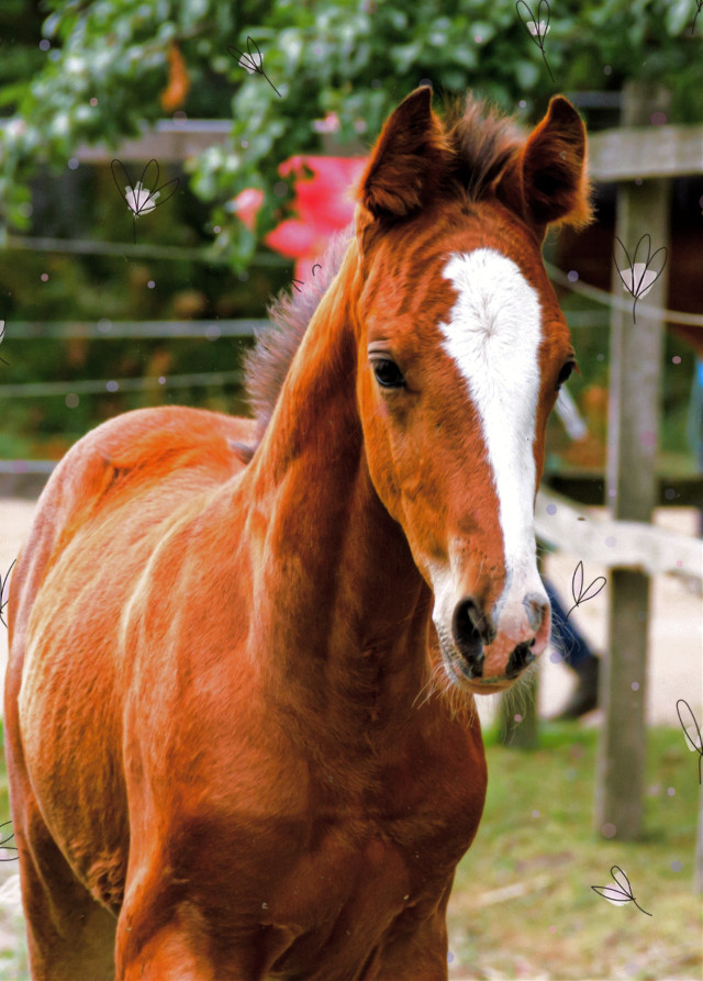 #my_horse