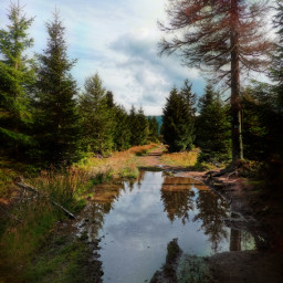 landscape road dirtroad puddles mountains nature trees reflection summer summertime holliday vacation beautifulday beautifulnature travel adventure freetoedit