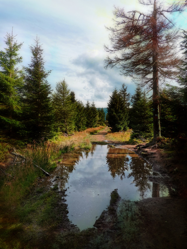 #landscape #road #dirtroad #puddles #mountains #nature #trees #reflection #summer #summertime #holliday #vacation #beautifulday #beautifulnature #travel #adventure