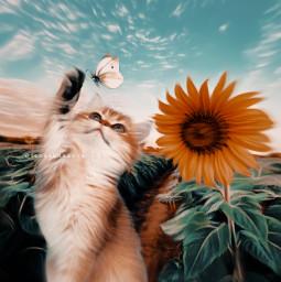 freetoedit art sunflower cat butterfly