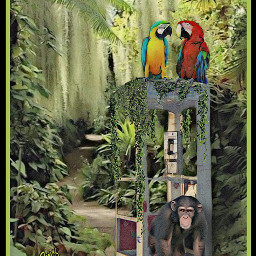 naturaleza chimpanzee guacamaya cabina selva hdr magieffects photography imagenes manipulationedit freetoedit