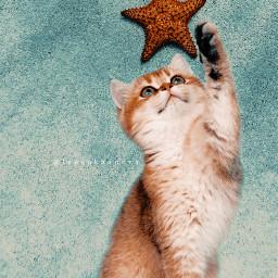 art cat star sea fantasy freetoedit