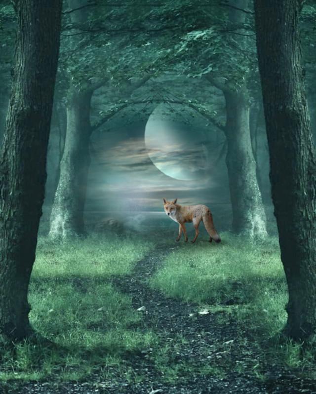 #freetoedit #surreal #backgrounds #nature #fox #forest #magical #trees #myedit #madewithpicsart #picsarteffects #mirroreffect #colorizeeffect lighten #stickeroverlay