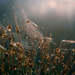 nature photography spider sun