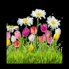 freetoedit flower meadow flowers daisy daisyflower nature background