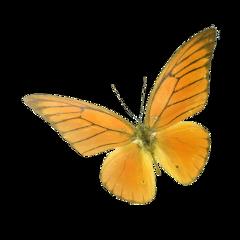 freetoedit butterfly butterflies animal nature