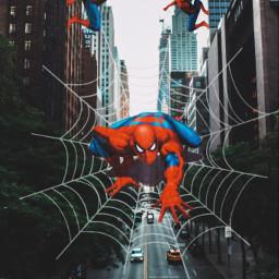 spiderman spiderweb freetoedit