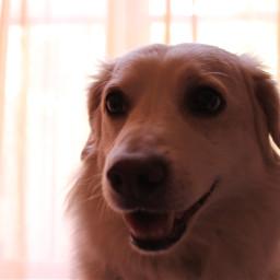 happyinternationaldogday nationaldogday dogday lovedogs❤🐶 puppies amoremio sempre always persempre fragola lovedogs