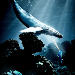 freetoedit myedit madewithpicsart editedbyme editedwithpicsart picsart nature underwater replay unsplash