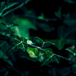 photography naturephotography naturelovers shoutout green greenaesthetic greenminimalism greenleaves greenleaf leaf leaves afterrain raindrops rain forest forestphotography galicia freetoedit