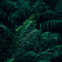 photography naturephotography naturelovers shoutout green greenaesthetic greenminimalism greenleaves greenleaf leaf leaves afterrain raindrops rain forest forestphotography galicia freetoedit fern bracken