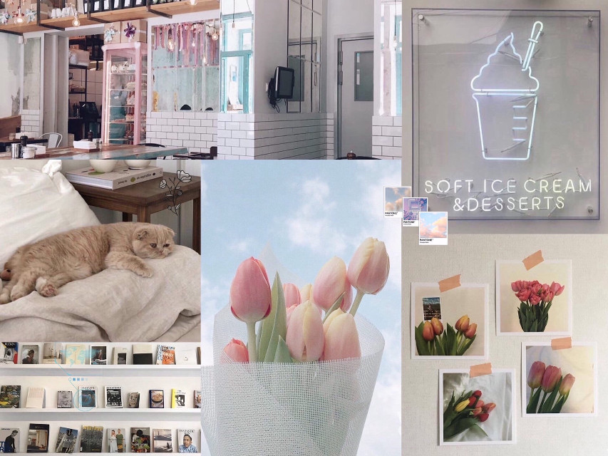 #cat #cute #shelving #shelf #books #beauty #like #wall #poster #animals #flowers #tulips #cafe #table #icecream #neon #sign #pictures #dessert #nature