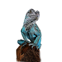 freetoedit lizard animal dragon blue