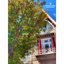 tree buildingexterior architecture plant building builtstructure window nature nopeople city day autumn house outdoors sky freshness residentialarea lowangleview liveathome buildingphotography