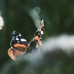 myphoto naturephotography butterfly edited editedwithpicsart beautifulnature filters maskeffect