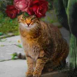 anti fridakahlo unibrow_queen flowercrown cat freetoedit