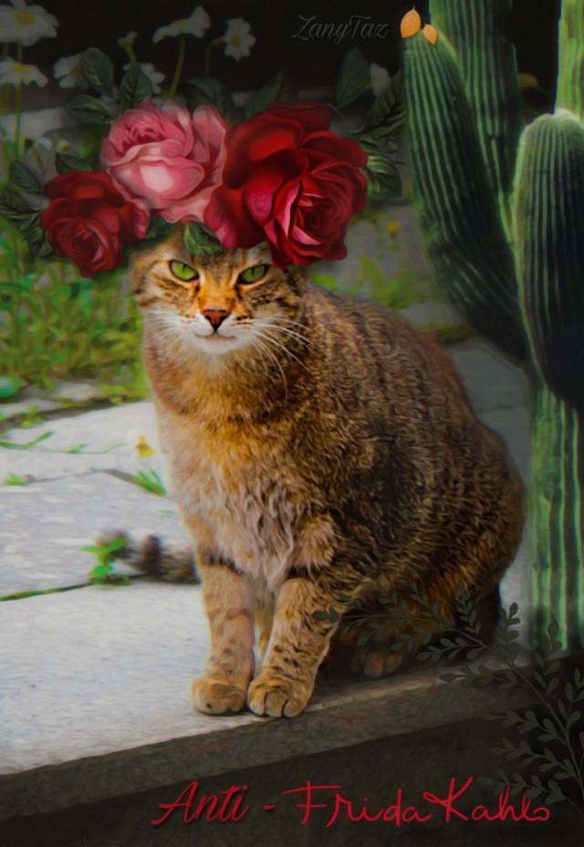 #anti #fridakahlo #unibrow_queen #flowercrown #cat #freetoedit