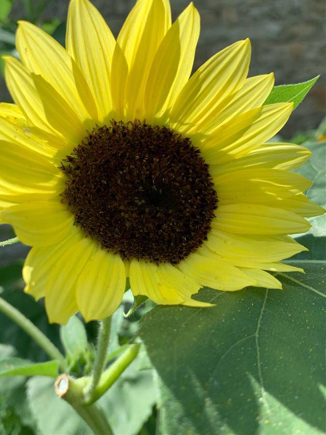 Taking a walk #sunny_day #yellowflower #summertime