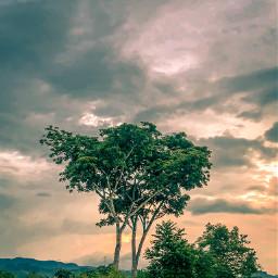 freetoedit guatemala nature travel photography summer tree sunset