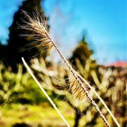 summer naturephotography sunny_day