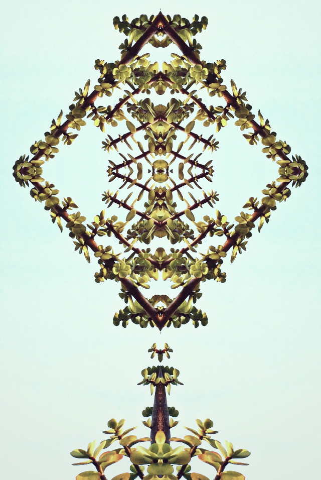 #mirrormaniamonday #art #design #style #mirrorart #playingwithnature #photomanipulation #editedstepbystep #mirroreffect #abstractartwork #symmetricalart #artisticexpression #myphotomyedit #mystyle #myart                                                                                         #remixed from @macmmaya                                                                                     #freetoedit