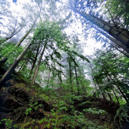 freetoedit forest trees leafs green