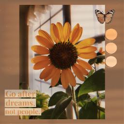 goafterdreams dream sunflower flower beige aesthetic beigeaesthetic butterfly floweraesthetic garden dreamon bright freetoedit