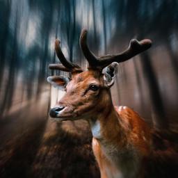 freetoedit mastershoutout forest fantasy fantasyart