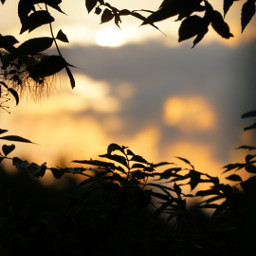 freetoedit nature sunset photography blackforest