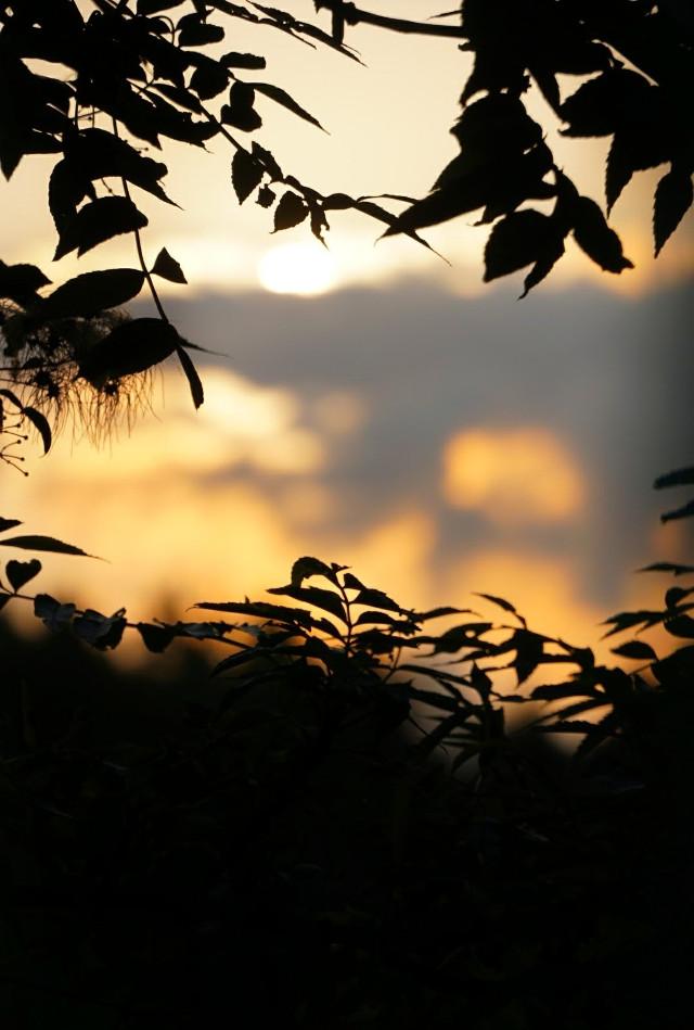 Good night picsartists °• •° #freetoedit #nature #sunset #photography #blackforest