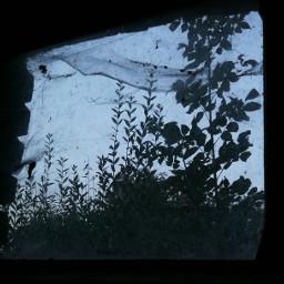 lookoutthewindow naturesihouette lightandshadow greysky spiderweb