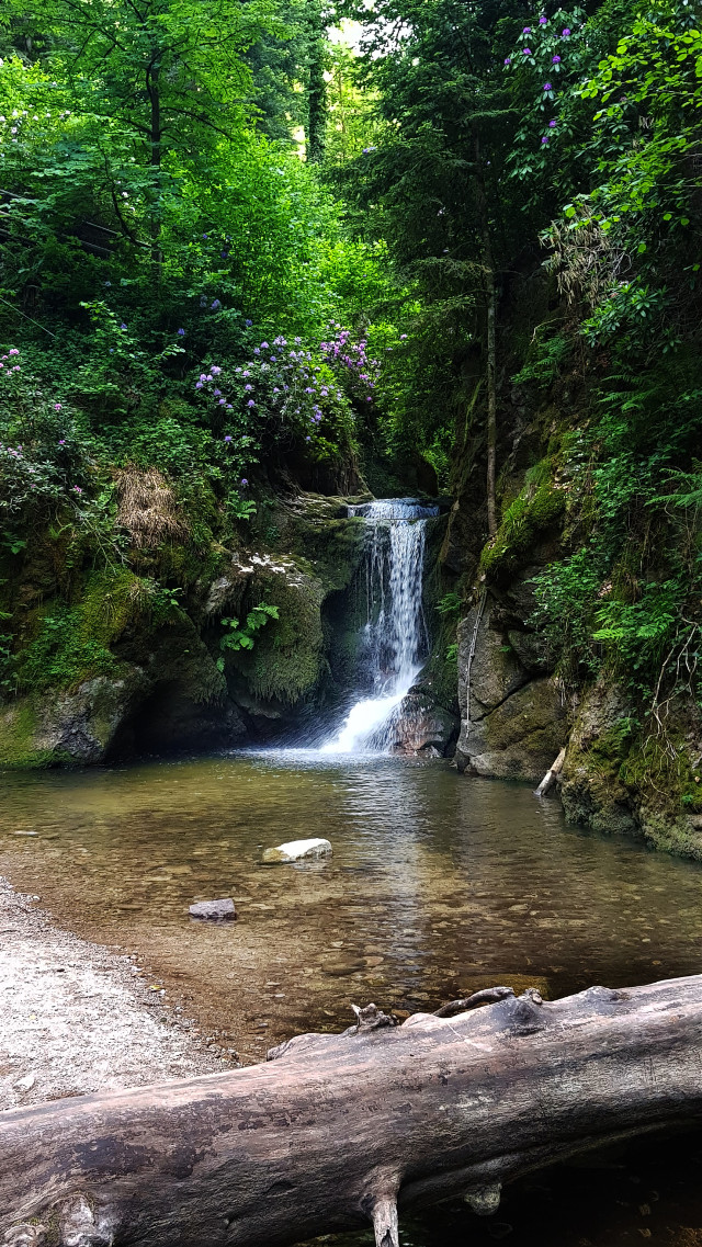 #freetoedit  #waterfall #forest #nature #photography  #blackforest