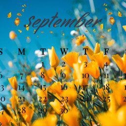 unsplash calander competition picart sprig flowers septembershere srcseptembercalendar septembercalendar freetoedit