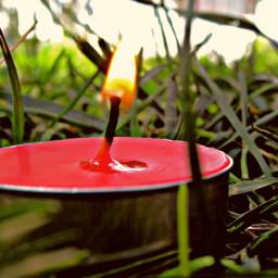 plain freetoedit nice nature park jungle candle pic nicepic picsart dream flower flowers grass grasses