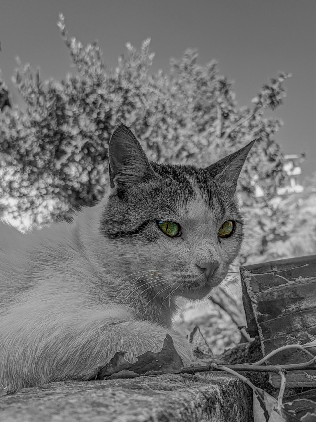 #cat #blackandwhite