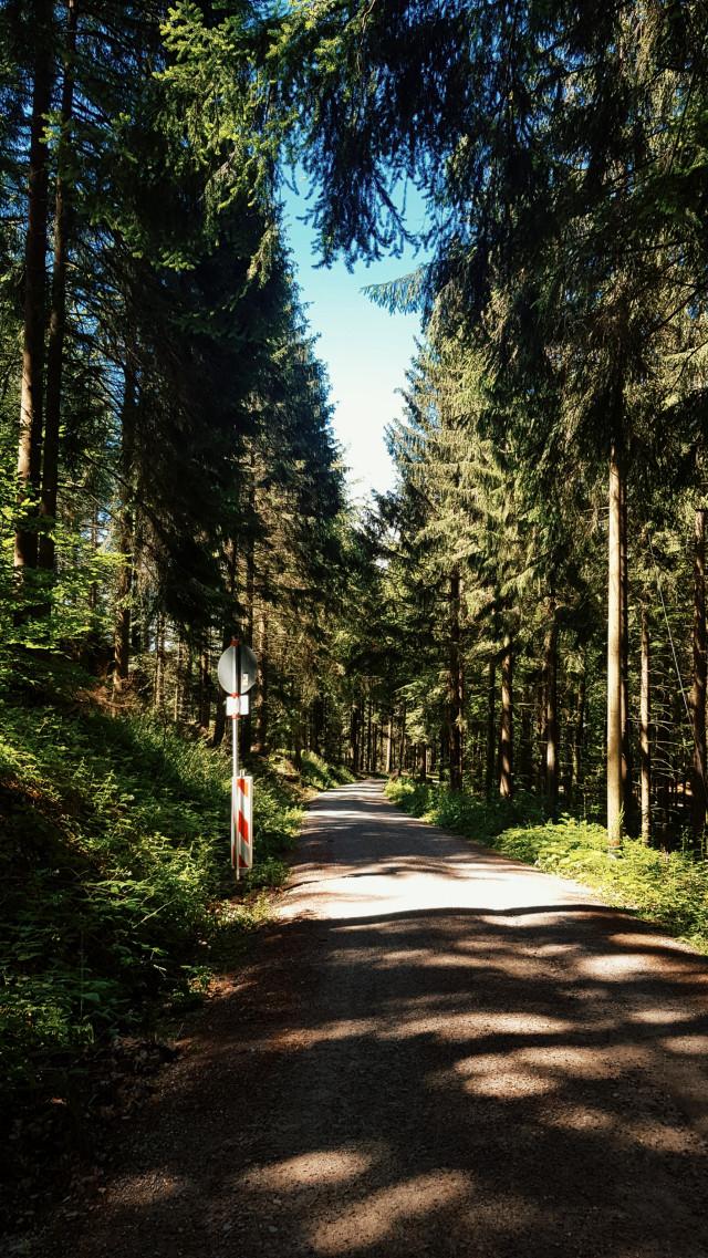 #freetoedit  #mv5effect  #forest #photography #blackforest #lovesnature
