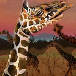 giraffeslife throughmylense freetoedit
